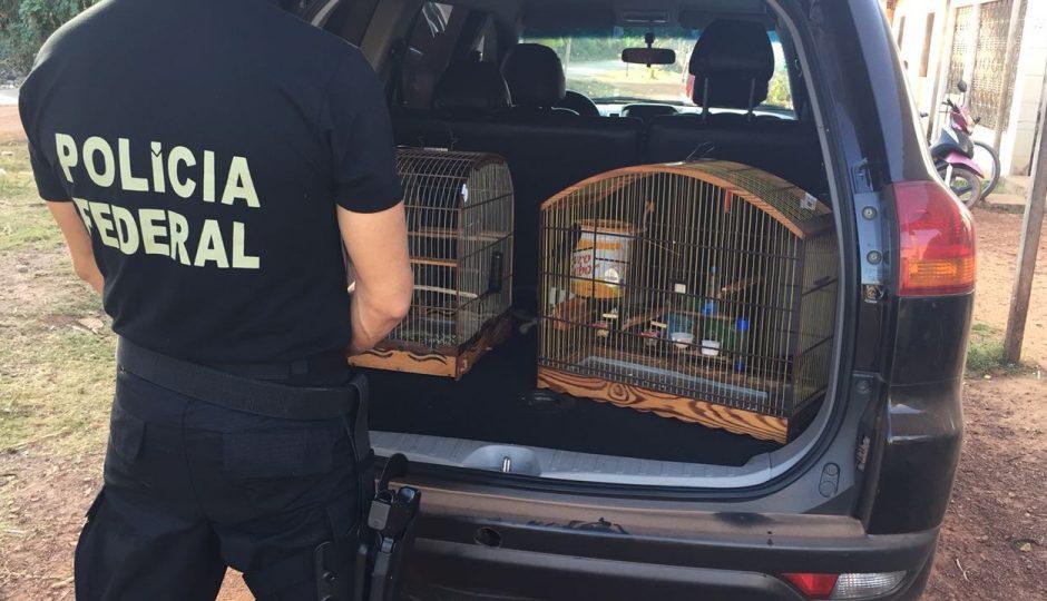"""Polícia Federal deflagra operação """"ASAS"""" em Rosário"""